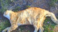 为什么野猫死后找不到尸体, 它们都去哪儿了? 看完心情复杂!