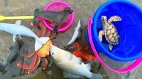 学习海豹等8种海洋动物