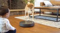 狗狗害怕扫地机器人, 于是主人把狗粮放到扫地机器人上