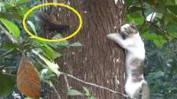 松鼠在树上挑衅猫咪, 下一秒肠子都悔青了, 镜头拍下全过程!