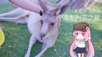 抱考拉摸袋鼠旱鸭潜水直升小飞机——澳大利亚之旅都做了啥? 丨五歌のVLOG