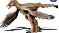 自然界最奇怪的鸟, 长有四只翅膀, 不用时就咬断两只!