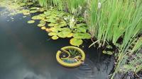 """像""""盆栽""""一样的过滤器, 往水池子里一扔, 脏水就能变清水"""