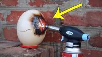 老外用气体火炬烤鸵鸟蛋, 这样能烤熟吗?