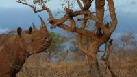 男子爬到树上拍犀牛, 接下来的事情让人后怕, 镜头拍下全过程!
