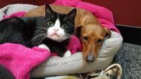 流浪猫狗被收养时, 紧紧依偎不愿分开, 能带我们一起走吗?