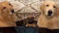 主人让三只狗狗在牛肉和苦瓜之间做选择, 最后一只果然与众不同