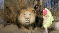 小宝宝和狮子互动时, 隔着玻璃亲了它一下, 狮子当场看懵了!