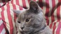 一只非常现实的猫咪, 主人不给它钱, 坚决不让摸