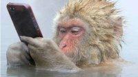 见过会泡温泉的猴子吗? 日本猴子销魂泡温泉表情走红, 吸引大批游客