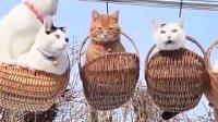 网友家里养了一群猫咪, 一天网友外出回来, 看到眼前一幕直接笑哭!