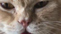 性感小猫在线吃播, 有人喜欢这样的小猫咪吗?