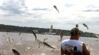 国外鱼多泛滥, 水面上跳的全是鱼, 根本抓不完!