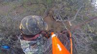 """站在树上的猎人, 用一根""""棍子""""狩猎野猪, 这种方式还是第一次见"""