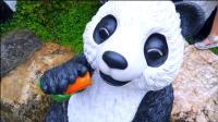 萌娃去到了一个有趣的地方玩耍, 遇见了好多可爱的大熊猫! —萌娃: 这小家伙真可爱呀!