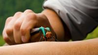 老外冒死挑战日本巨人大黄蜂, 背后的原因让人敬佩!