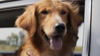 这是一只有想法的狗, 痴情四世转生只为寻主, 《一条狗的使命》暖心又治愈