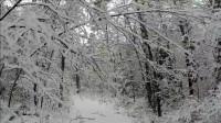 露营 旅行 荒野生存体验之 独自冬季在森林过夜