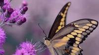 【数学大师高中】函数的概念——蝴蝶效应