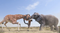大象用鼻子和长颈鹿打架, 一个出鼻一个用脖子, 场面真是太搞笑了