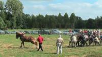 一匹马和18个成年男性拔河, 这场不公平的比赛, 场面有点搞笑