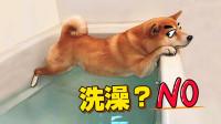 这哪是洗澡, 这是要狗子的命啊!