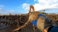 渔夫换了个地方赶海, 这个地方螃蟹真大! 还没人抓