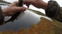 钓鱼之急流中钓到鳟鱼