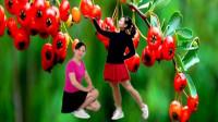 云儿开心广场舞水兵舞《红山果》原创32步附教学