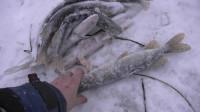 冬季冰钓之大丰收