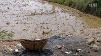 湖北随州:尚市镇收桃人汪海洋第一次使用抛秧技术