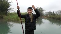 小莫用糍粑河道野钓, 竟然都是同一种河鱼上钩, 好奇怪!