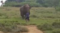男童吃花生被呛窒息而亡/男子不避让救护车被罚/醉酒男子向大象示威被踩死