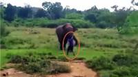 实拍: 男子催眠野生大象未果反被踩踏致死