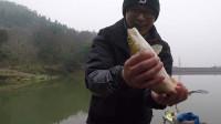 钓鱼实战145, 冬季钓鱼要人找鱼, 意外钓获赤眼鳟
