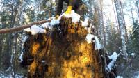 荒野生存体验之森林里过夜——在树林里露营, 森林做厨房。