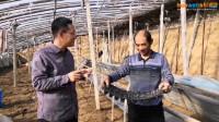温室内豆角播种技术