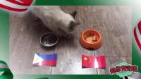 """超级竞彩猫: 仅""""围脖""""看好国足赢菲律宾, 国足真的要掉链子?"""