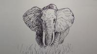 速写大象窦老师教画画