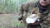 渔民 钓鱼 露营 旅行2018年在西伯利亚泰加钓鱼钓到梭子鱼