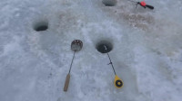 钓鱼比赛怎么快速找到一群鱼