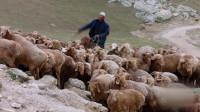 02羊群踏上征途