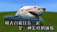 我的世界:和大白鲨住在一起是一种怎样的体验?