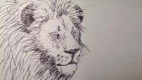 钢笔速写雄狮窦老师教画画