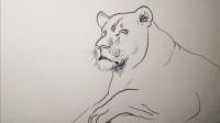 速写狮子窦老师教画画