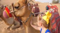 萌娃小可爱和爸爸一起去到沙漠旅行, 这儿的可景色真美! —萌娃: 好可爱的骆驼!