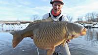 外国老表在雪地水沟里钓了一条60斤重的大鲤鱼, 看着太肥美了