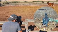 国外农场气枪打鸽子: 先听到击锤声然后再是噗击中目标的声音带你身临其境的射击快感