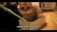 猫咪每天坐在纸盒里让主人拉, 主人: 你自己多重心里没点数吗?