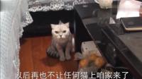 它到底想干嘛? 女主对猫咪毕恭毕敬的, 就怕它突然冲过来!